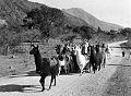 Llamas humahuaca 1920.jpg