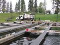 Loading Fish into Distribution Truck (5836797873).jpg