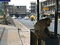 Lob Buri, monkey town - panoramio.jpg