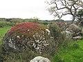 Localita Laccanu- Thiesi- Licheni su roccia - panoramio.jpg