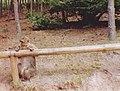 Macaque de Gibraltar (Macaca sylvanus) (07).jpg