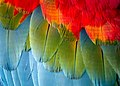 Macaw Feathers.jpg
