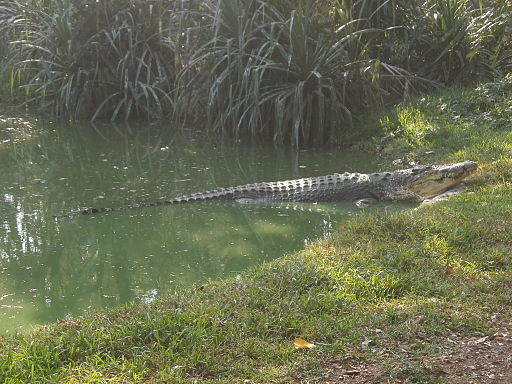 Madras-Crocodile-Bank-2