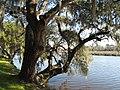 Magnolia Plantation and Gardens - Charleston, South Carolina (8556505536).jpg