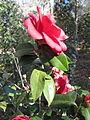 Magnolia Plantation and Gardens - Charleston, South Carolina (8556556876).jpg