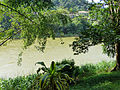 Mahaweli-Jardin botanique de Kandy (2).jpg
