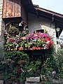 Maison fleurie à Yvoire 1.jpg