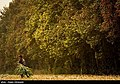 Maize Iran 28.jpg