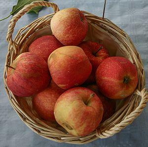 Gala (apple) - Image: Malus Gala