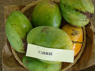 Carrie (mango) - A display of Carrie mango at the Redland Summer Fruit Festival, Fruit and Spice Park, Homestead, Florida