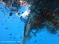 Marine organisms entangled in a ghost net within the Maldives (Olive Ridley Project).jpg
