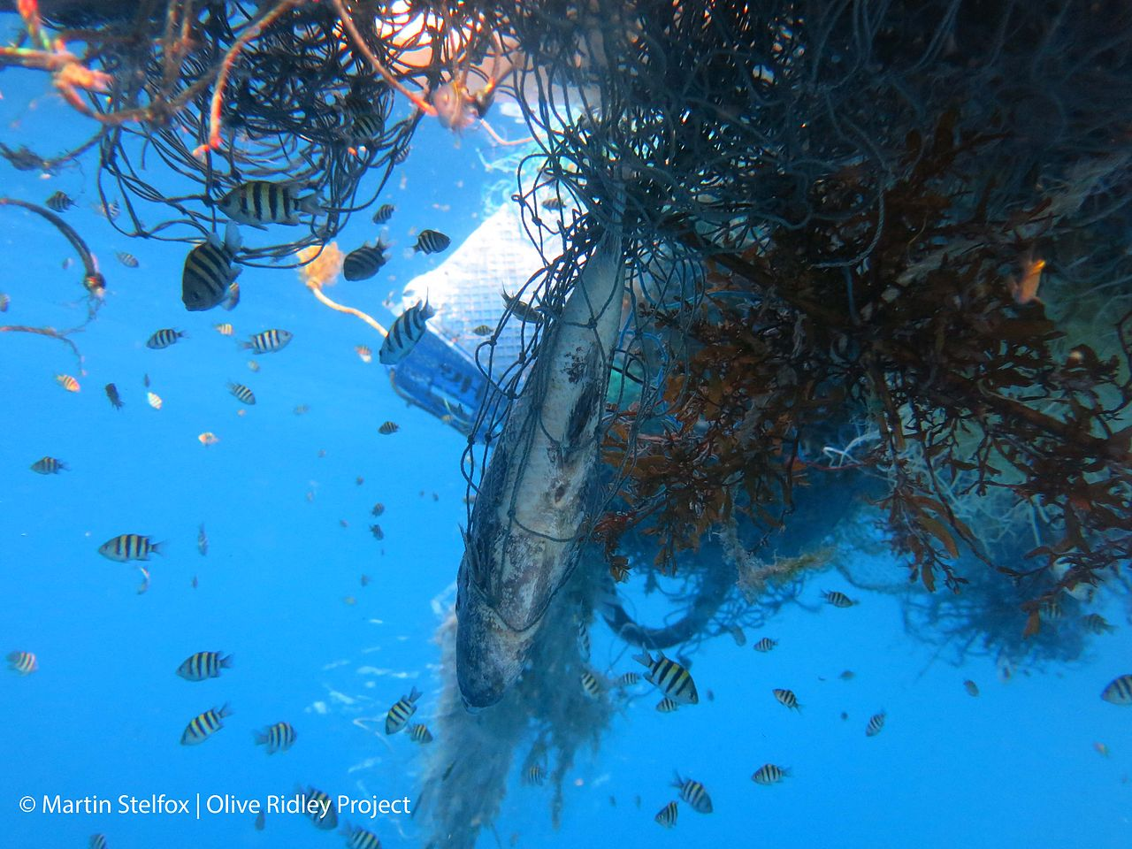 A fish and other marine life trapped in a discarded fishing net.
