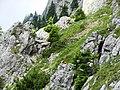 Marmot - panoramio (3).jpg