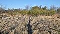 Marsh - Guelph, Ontario 2020-05-13 (02).jpg