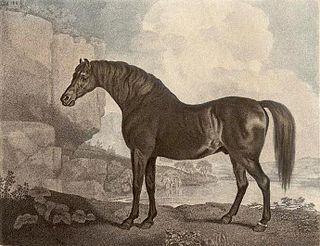 Marske (horse) British Thoroughbred racehorse