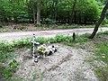 Maruszka Puszcza Zielonka (4).jpg