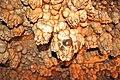 Meramec Caverns 0113.jpg