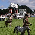 Miniature ponies in the West Ring, New Forest Show, New Park - geograph.org.uk - 505490.jpg