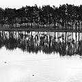 Mir, Belarus - panoramio (39).jpg