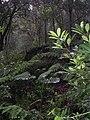 Moist tropical montane forest on Mt Legumau (1100 m) Luro subdistrict, Lautem, Timor-Leste.jpg