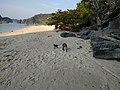 Monkeys on Monkey Island, Cat Ba.jpg