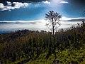 Mont Gourougou(arbre ).jpg