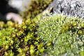 Moss (15797146556).jpg