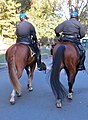 Mounted patrol golden gate park, san francisco (2012) (8104293192).jpg