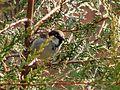 Mr Sparrow (4366733044).jpg