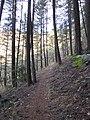 Mule Mtn. trail - panoramio.jpg