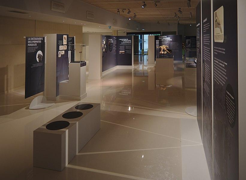 Interior of the musée-forum de l'Aurignacien
