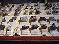 Museum für Naturkunde Berlin February 2008 0023.JPG