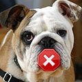 Muted allknowing Bulldog.JPG