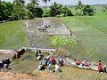 Mysore si0855.jpg