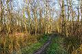 Nationaal Park Weerribben-Wieden Pad tussen berken en moeras 01.jpg