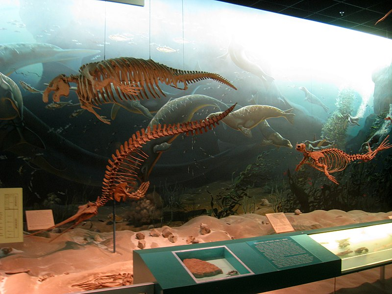 File:National Museum of Natural History - IMG 1966.JPG