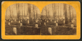 National cemetery, Arlington, Va, by Bell & Bro. (Washington, D.C.) 5.png