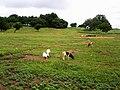 Nature of grazing vegetation.jpg