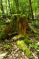 Naturpark Taunus SimArt8.jpg