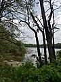 Naturschutzgebiet Haidenaab 03.jpg