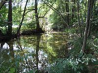 Naturschutzgebiet Storkower Kanal 05.jpg