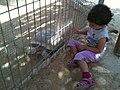 Negev Zoo Beersheva Israel IMG 0687.JPG