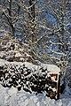 Neige 29 janvier 19 (26) (47007776081).jpg