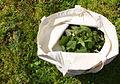 Nettle sack (5590837445).jpg