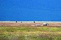 Ngorongoro 2012 05 30 2521 (7500992884).jpg