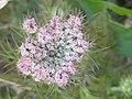 Noordwijk - Pink flowers v3.jpg