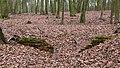 Nottuln, Lager Herbstwald -- 2016 -- 1475.jpg
