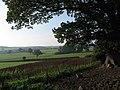 Oak Trees - geograph.org.uk - 261789.jpg