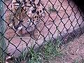 Oaklawn Farm Zoo, May 16 2009 (3539729530).jpg