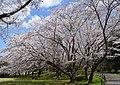 Oba Castle Park, Fujisawa, Kanagawa.jpg